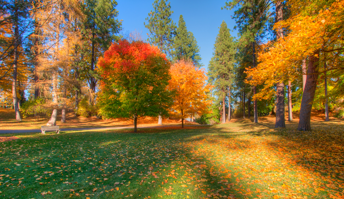 Manito Park in the fall
